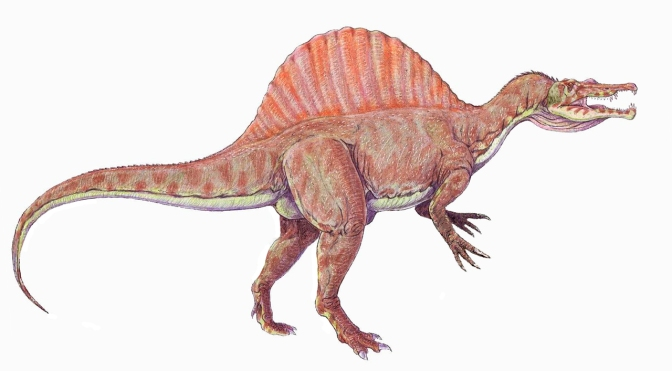 Reconstrucción de Spinosaurus aegypticus