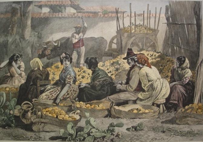 Mercado_de_Naranjas